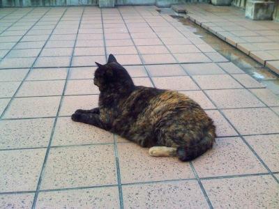 080729_cat