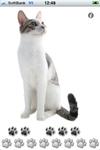 Singingcat